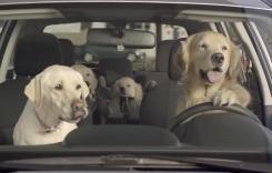 The Barkleys: Subaru, în sânul celei mai drăgălaşe familii de căţeluşi