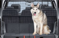 Cum transporti animalele de companie in Europa