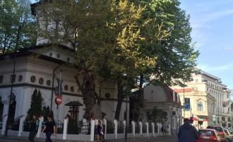 Bucureştiul are copaci de aceeaşi vârstă cu el. Povestea celui mai bătrân pom din Capitală
