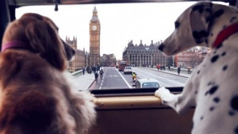 Primul autobuz pentru căței a fost lansat în Londra