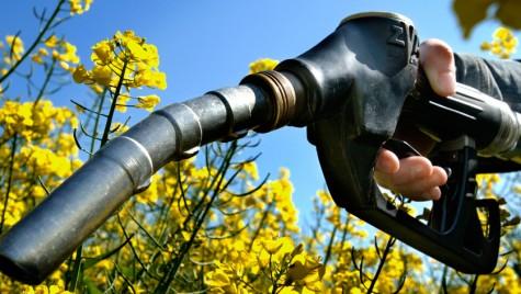 Biocombustibilii, încotro?