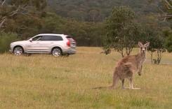 Australia, avem o problemă! Modelele autonome Volvo nu pot detecta canguri!