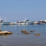 Mica flotă locală se alimentează dimineața și se pregătește de plecarea în larg.