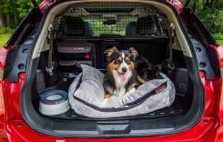 Nissan X-Trail Paw Pack – Mașina pentru căței