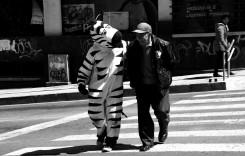 Orașul în care zebra te ia de mână și te ajută să treci strada