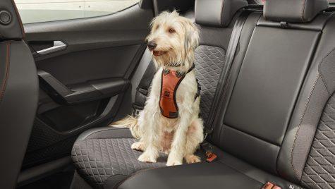 Studiu: 50% dintre șoferi conduc mai atent când au câinele în mașină